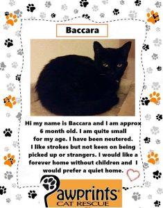 Baccara Cat
