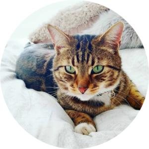 cat rescues Bradford